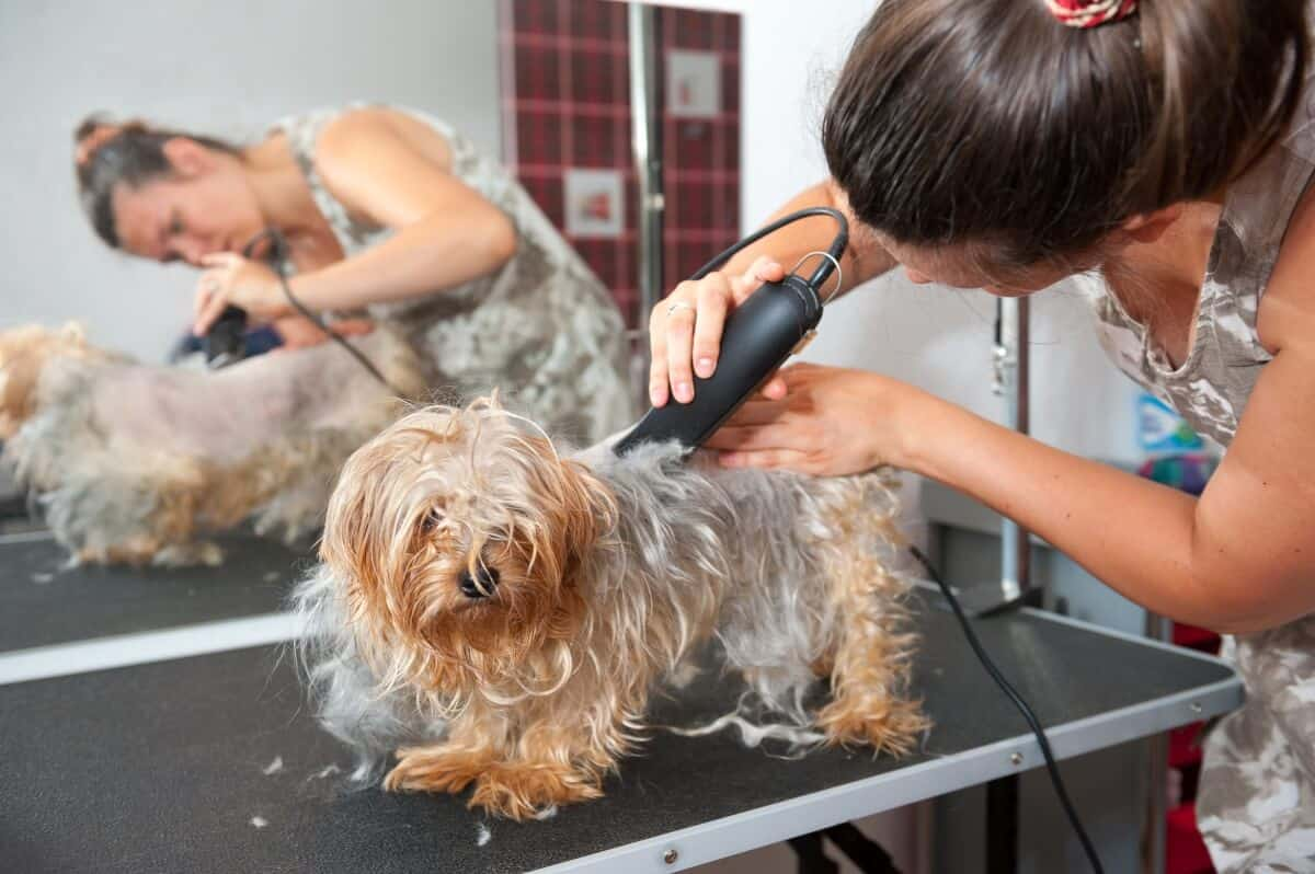 How to Hire a Professional Pet Groomer